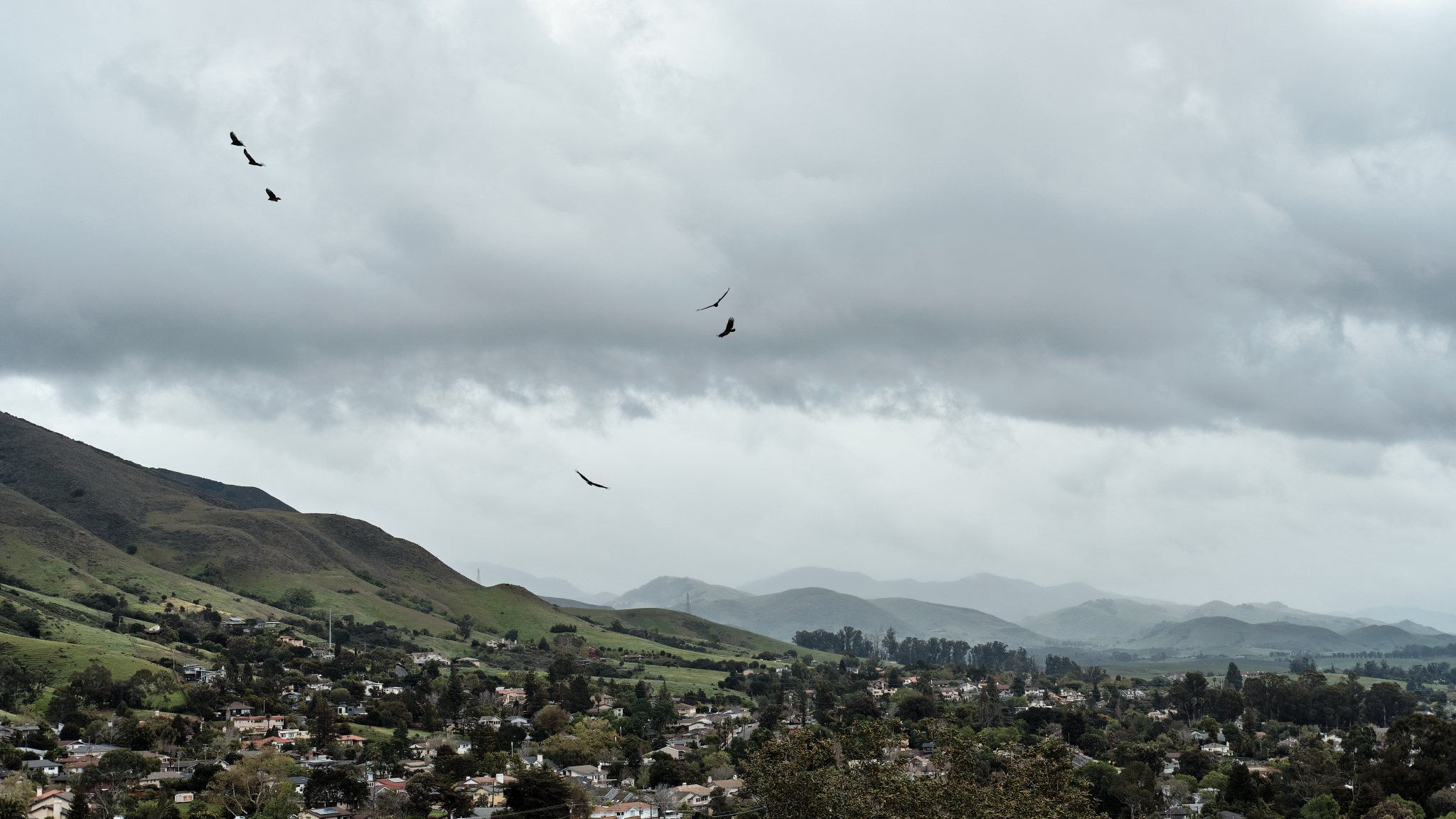 Photo of a San Luis Obispo, California  residential area and hills with 5 turkey vultures flying in the cloudy sky.